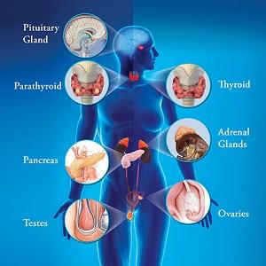Прием эндокринолога симферополь